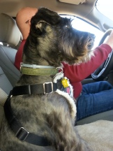 JoJo is so intent but loving the ride!